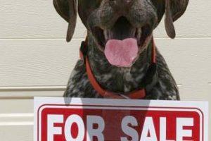 Wanna Buy A Dog?
